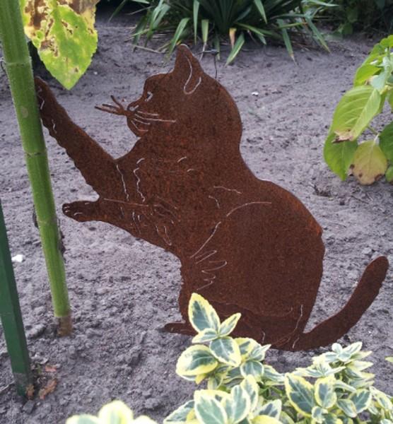 Katze Lotti