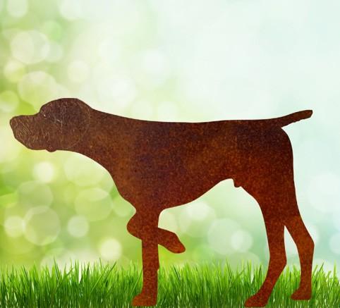 """Vorstehhund """" Don """""""